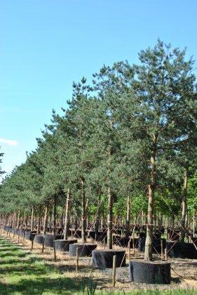 Bomen In Airpot-springring 2