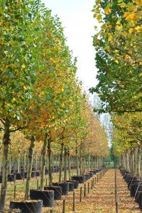 Bomen In Airpot-springring 6-1