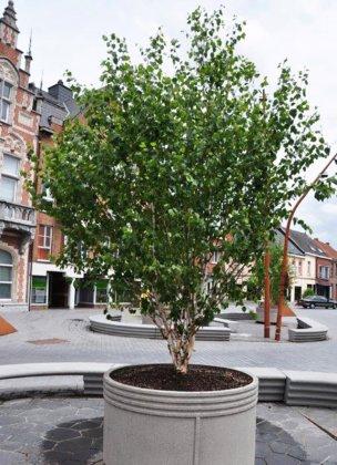 Ronde boombakken op plein